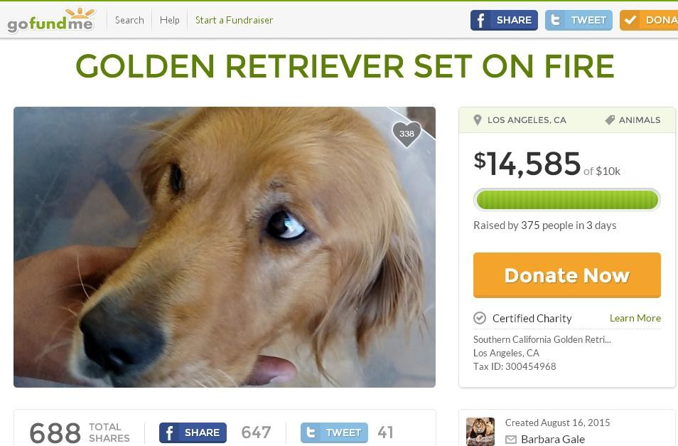 Photo via GoFundMe: Golden Retriever burned with acid